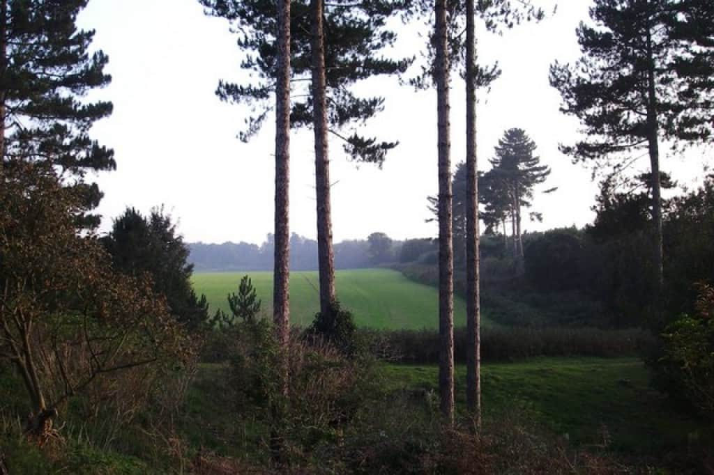 Supposed UFO landing site at Rendlesham Forest. Image: Simon Leatherdale.