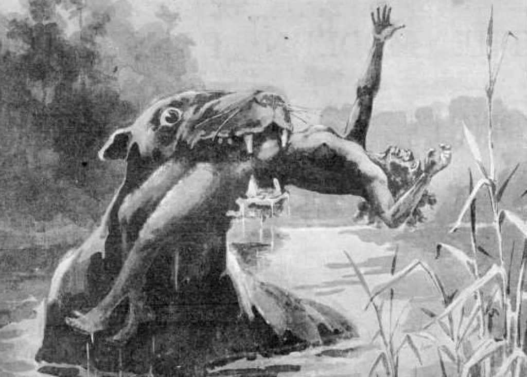 A drawing of a Bunyip (1890).