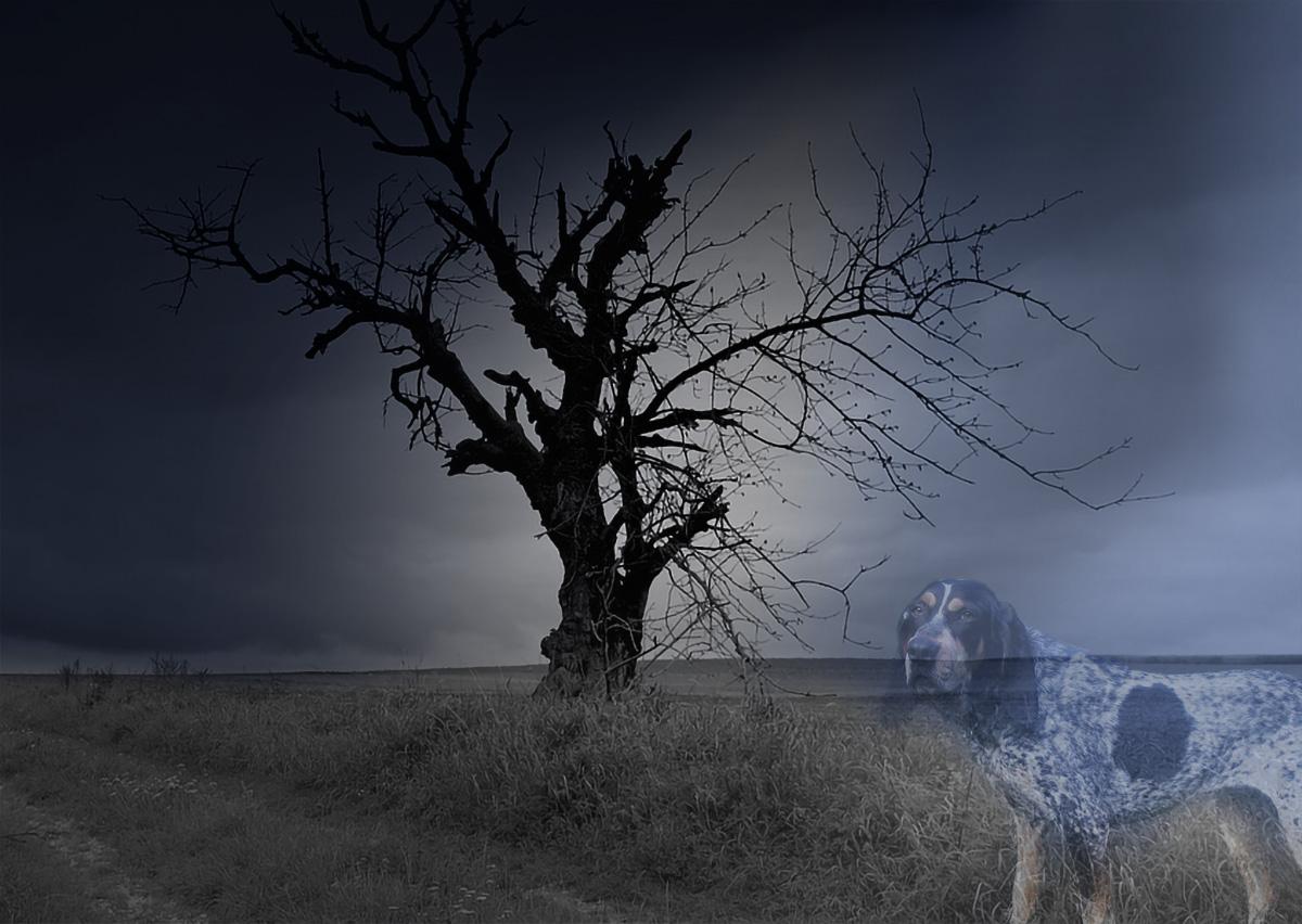 blue dog legend ghost of port tobacco
